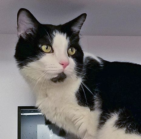 Aspca american society for the prevention of cruelty to animals aspca pet of the week regal m4hsunfo