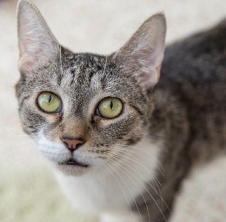 ASPCA Pet of the Week: Tahiti