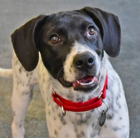ASPCA Pet of the Week: Waco