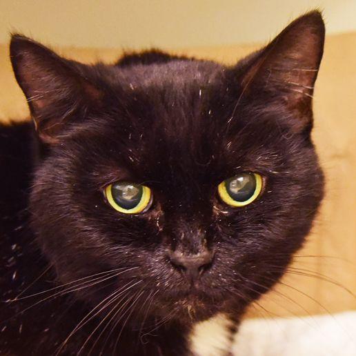 Felsebiyat Dergisi – Popular Adopt A Cat For Free Nyc