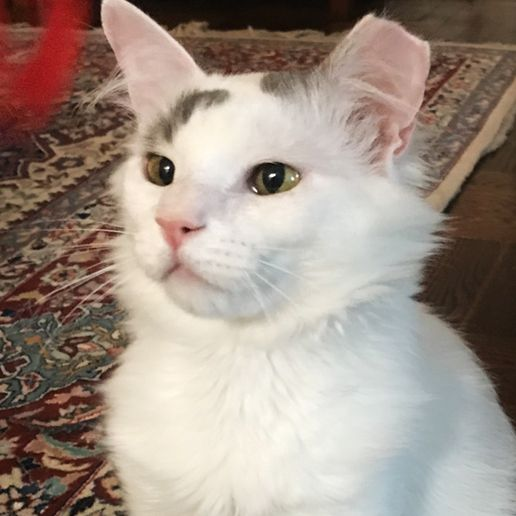 Gem with foster parent's cat