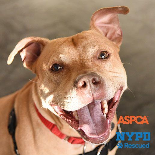 Adoptable Dogs Nyc Adoption Center Aspca