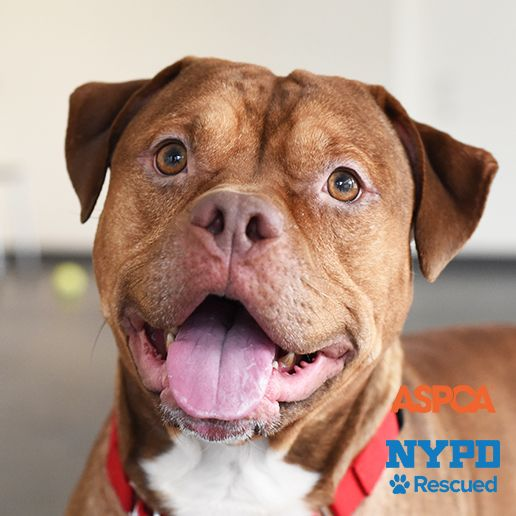 To Adopt A Dog In Nyc