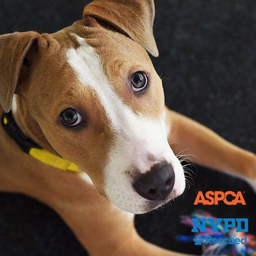 adoptable dogs aspca