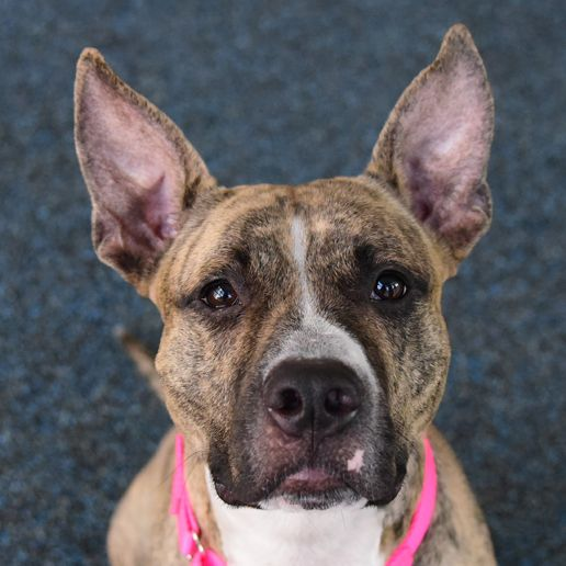 Adoptable Dogs | NYC Adoption Center | ASPCA