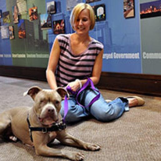 Woman sitting on floor with pit bull
