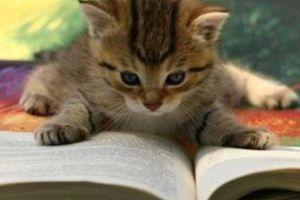 a cat reading a book