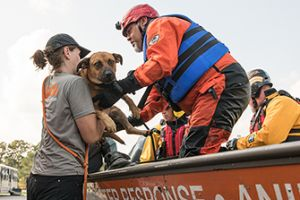 responders rescuing a dog