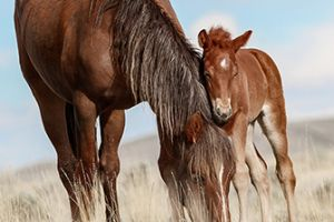 a wild horse and its colt