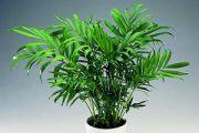 Poisonous Plants | ASPCA