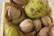King Nut