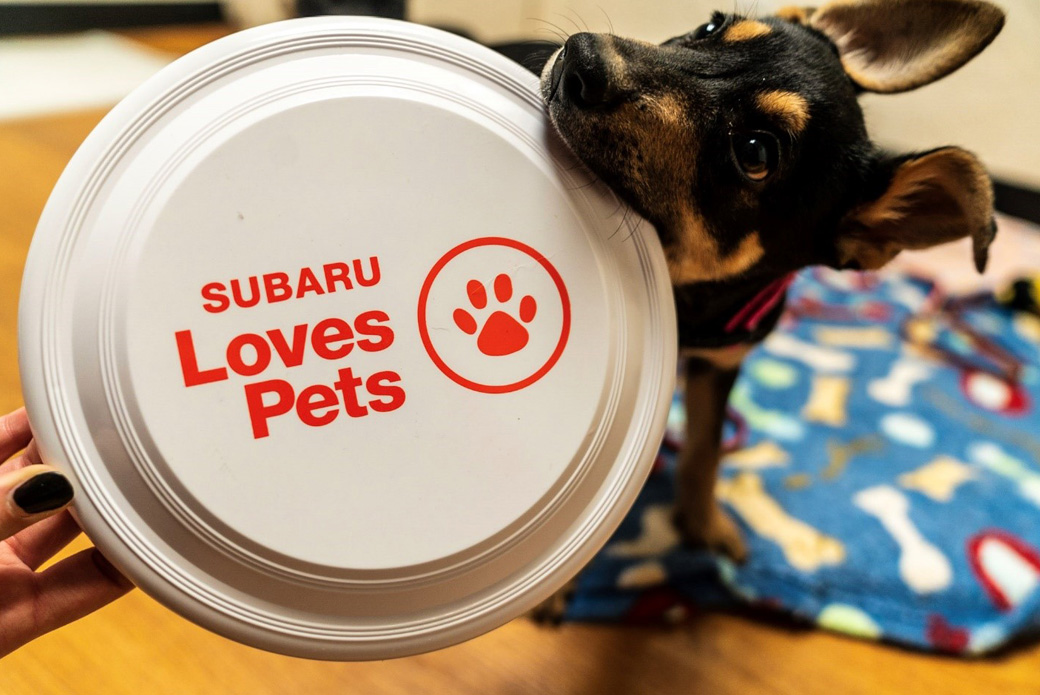 dog with a Subaru Loves Pets frisbee