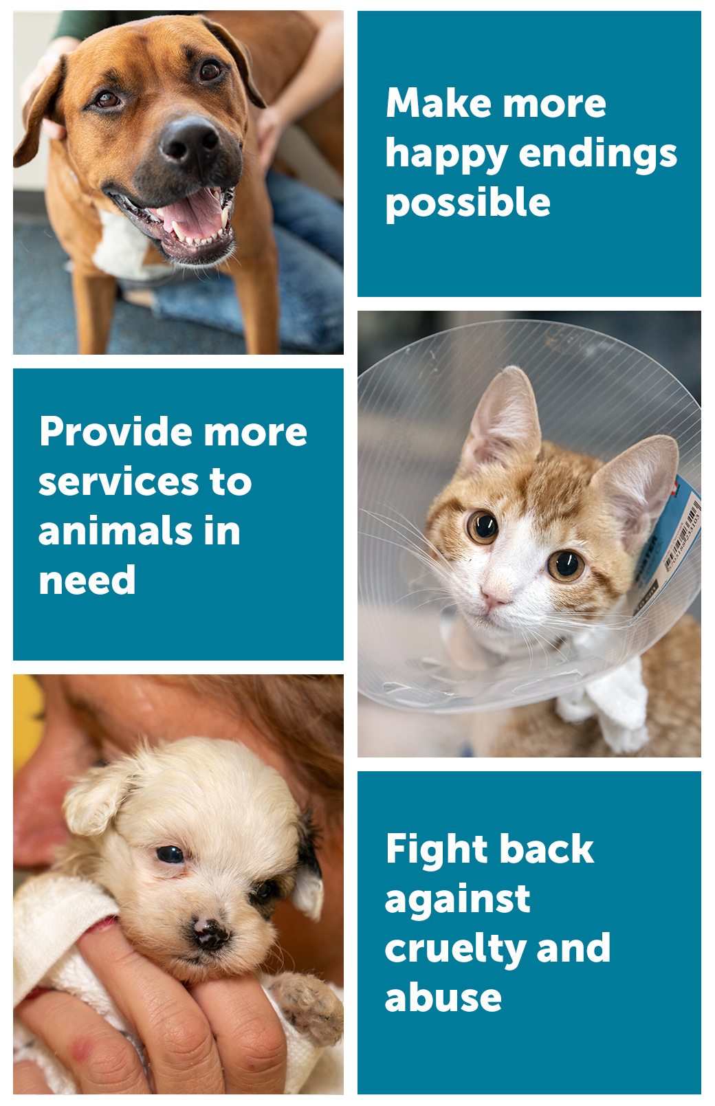 Make more happy endings possible, Provide more services to animals in need