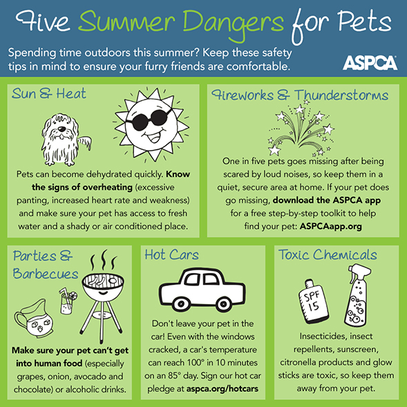 This Fourth of July, Celebrate Pet Safety