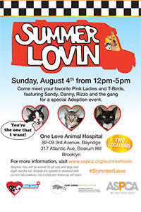 Summer Lovin' Cat Adoption Event in Brooklyn!