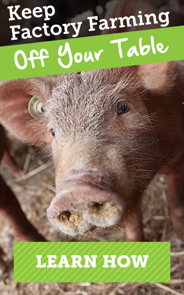 Farm Animal Welfare | Factory Farms | Food Labels | ASPCA