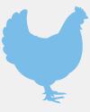 swyh advocacy chicken