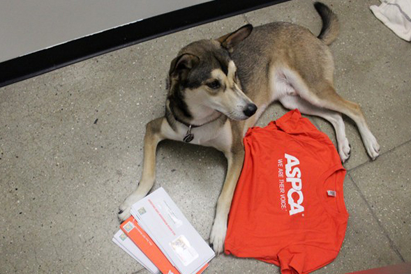 Dog laying on floor next to mail and aspca shirt