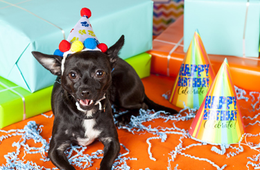 Donate Your Birthday To The ASPCA And Help Save Animals Best Gift Is Of Life For In Need Learn More