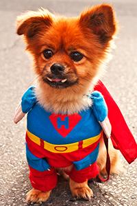 Dog Wearing a Halloween Costume
