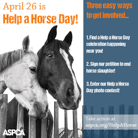 Three Ways to Take Part in ASPCA Help a Horse Day This Weekend