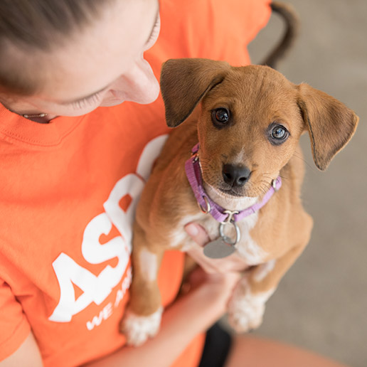 Careers: Jobs at the ASPCA | ASPCA