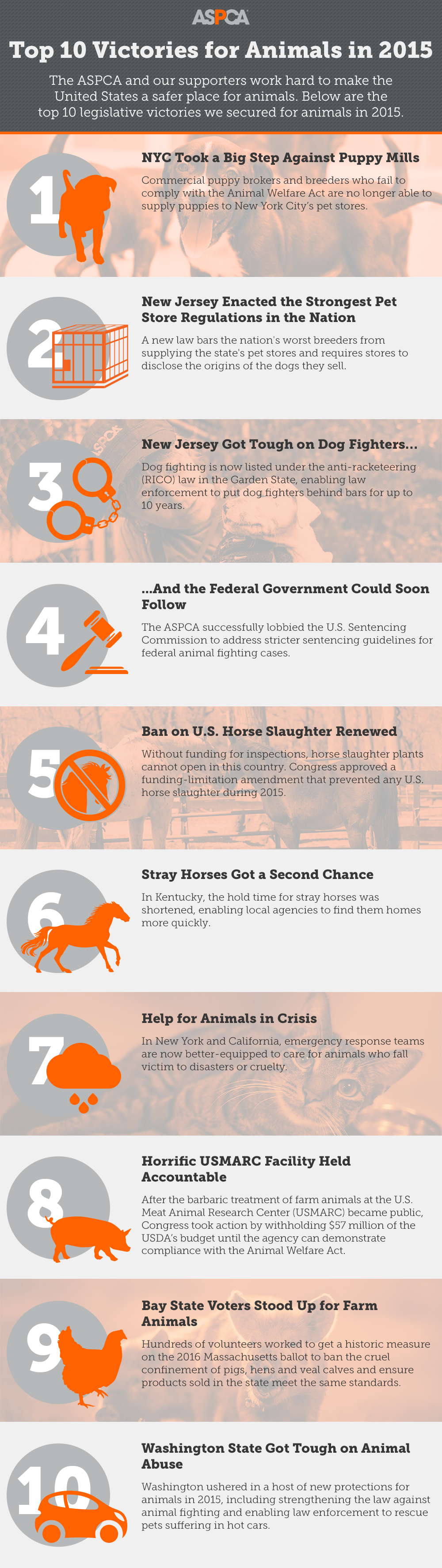 Big Wins for Animals in 2015! Check Out the ASPCA's Top 10 Legislative Victories