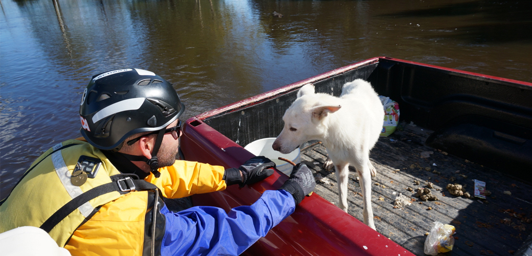 Dog being rescued from water
