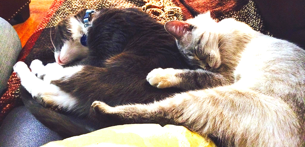 Two Pasts, One Future: Chester & Elsa's Happy Tail