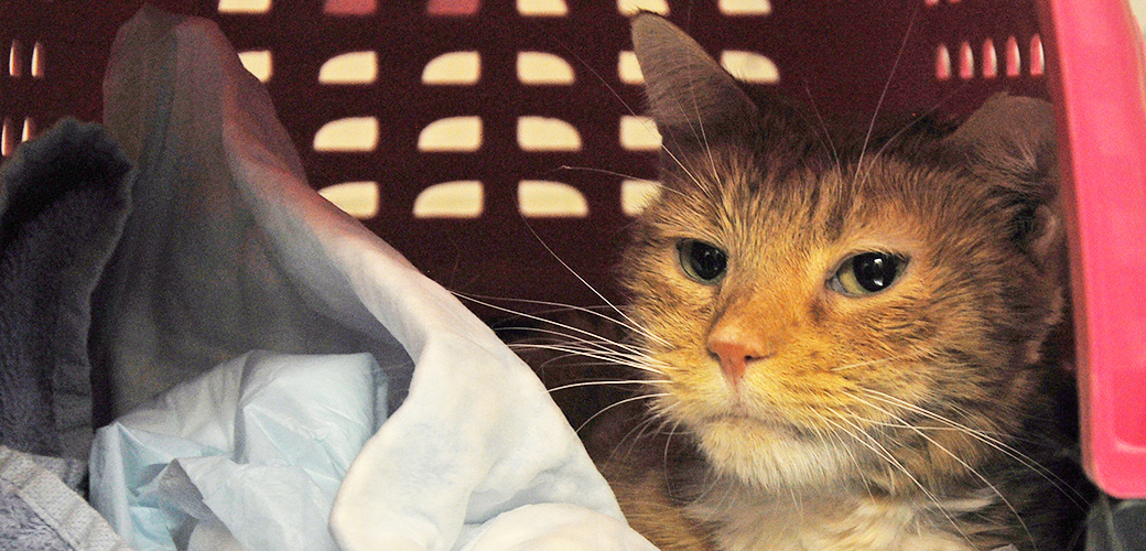 Untreated Dental Issues Can Lead to Major Pain for Pets