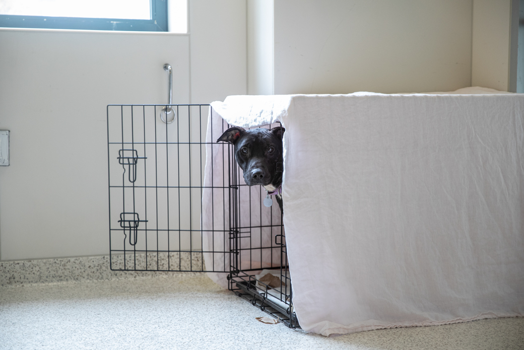 Dog sticking head out from crate