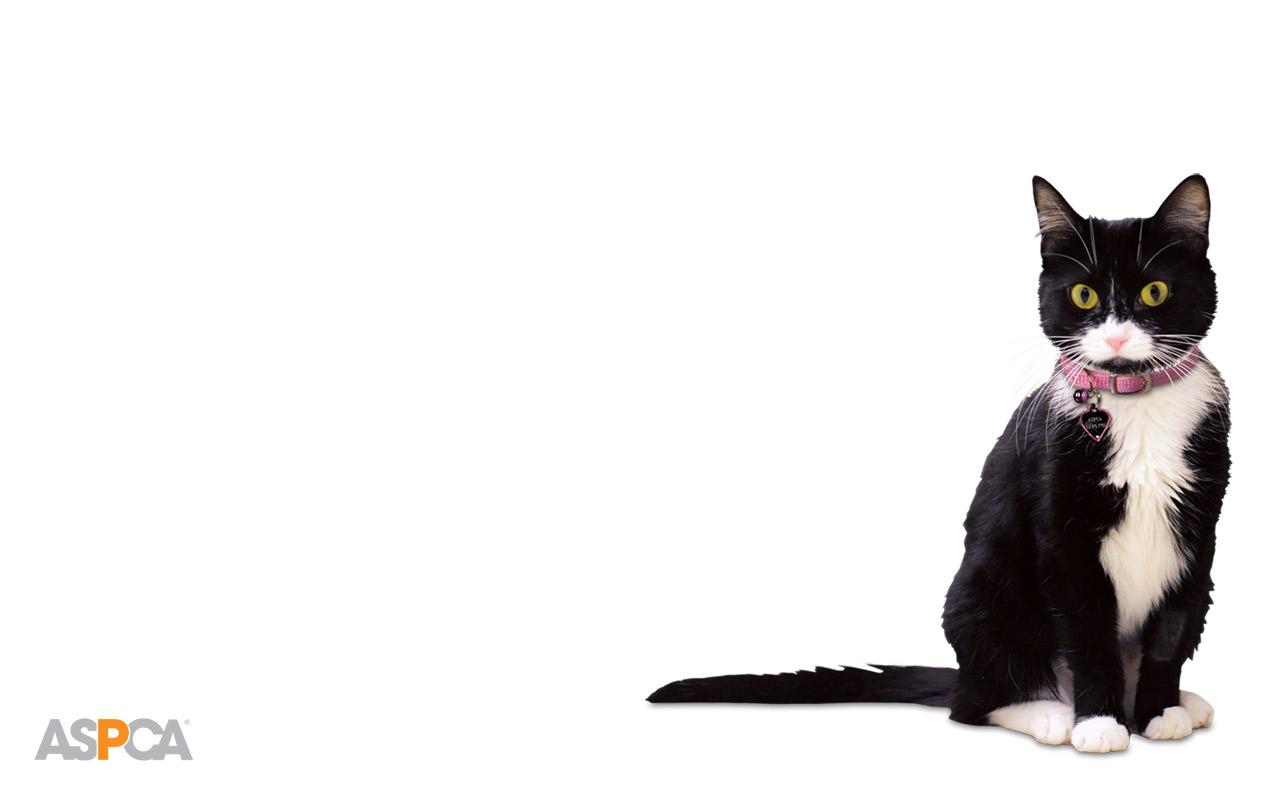 Join the ASPCA Advocacy Brigade!
