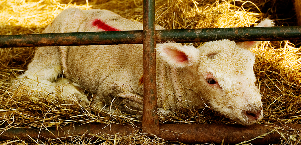 USDA's Meat Animal Research Center: An American Horror Story