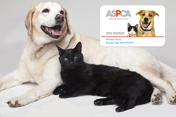 Yellow lab and black cat with ASPCA membership card in background
