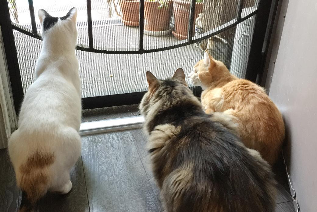 Willie with foster buddies