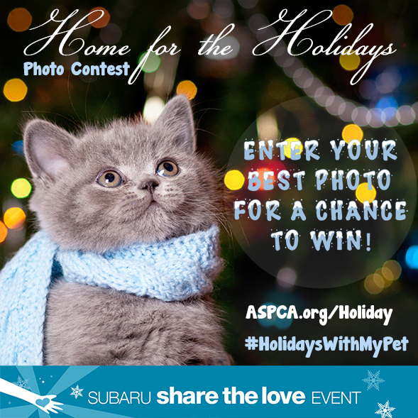 Win Big This Holiday Season! Enter the ASPCA's Annual Home for the Holidays Photo Contest
